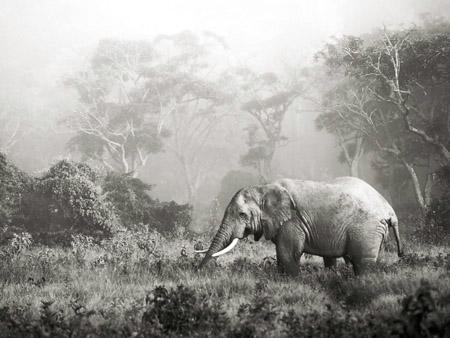 FRANK KRAHMER - African Elephant - 3FK3130